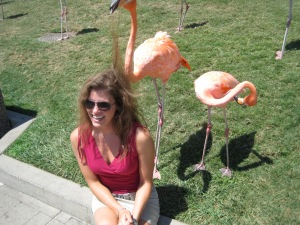 Another first... letting the Sea World flamingos  nibble my hair! Apparently it's their way of helping me groom myself. They were gentle and quietly 'honked' while doing it. Classic.